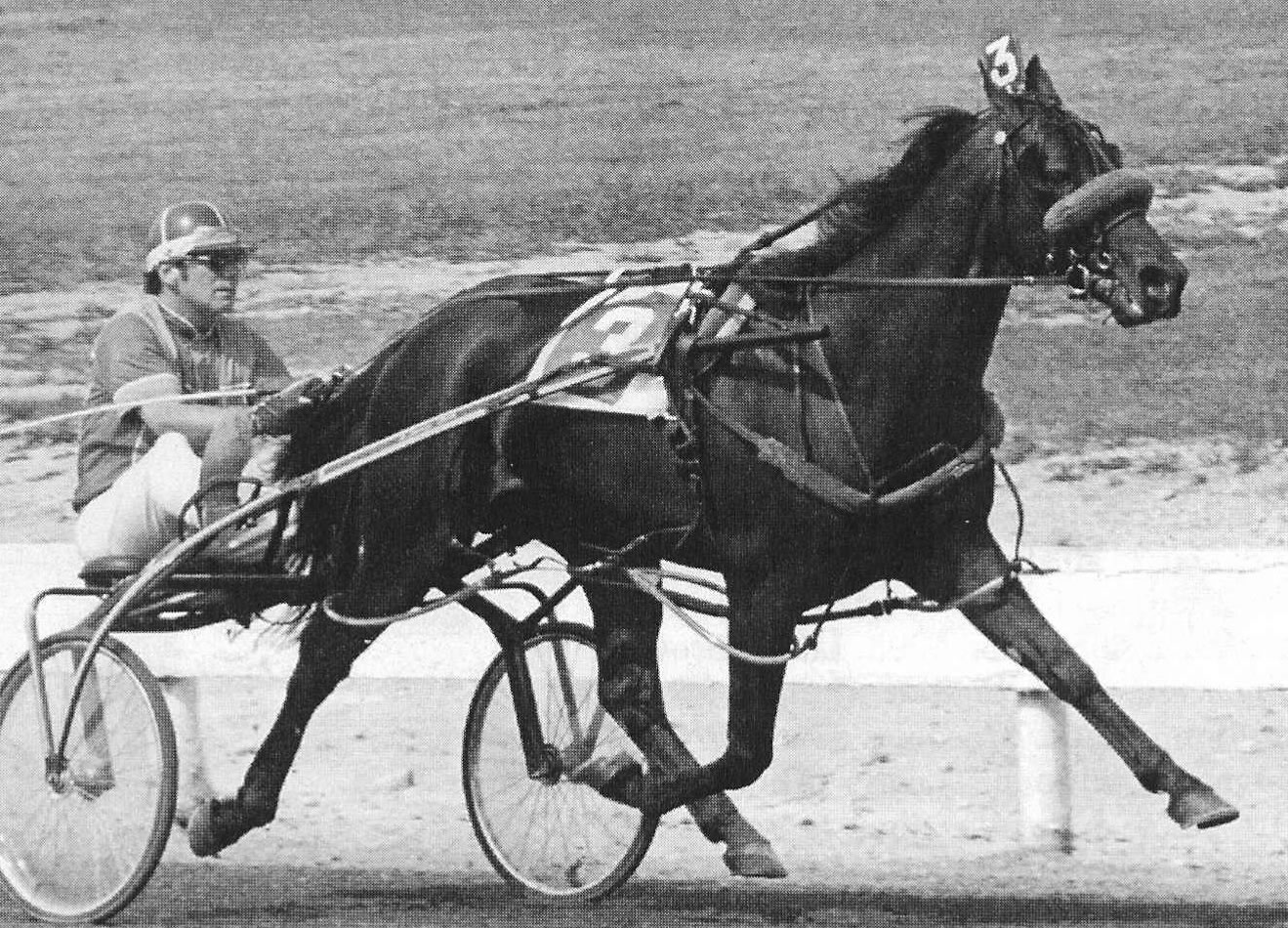 Abercrombie - Champion Standarbred Harness Race Horse